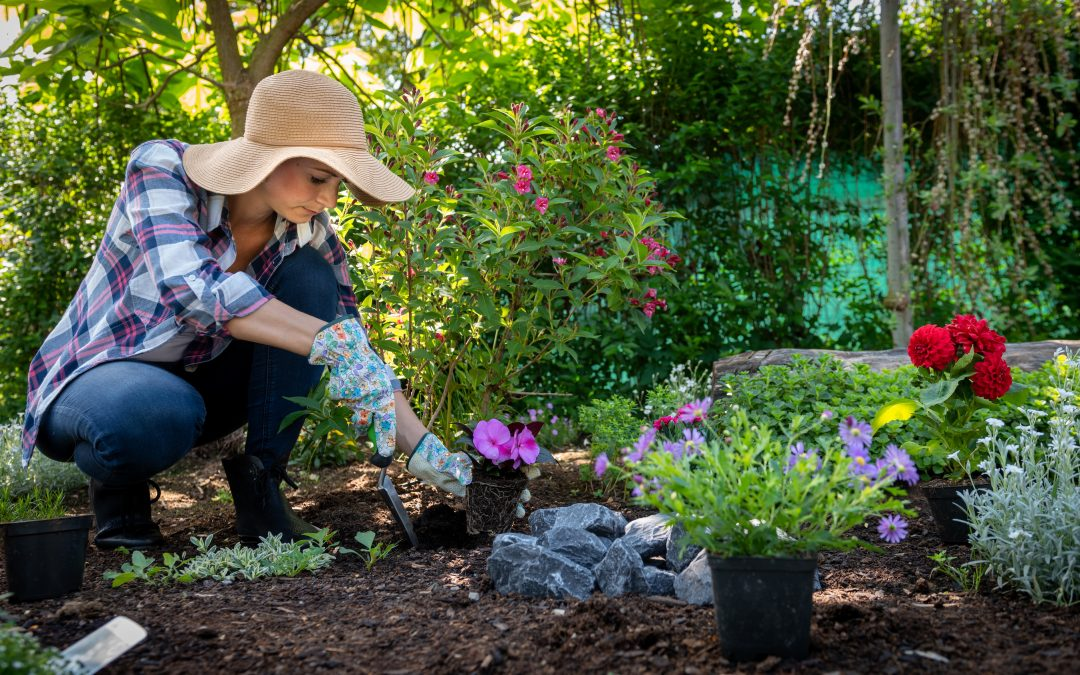 Want To Start A Garden? Here Are 10 Steps That May Help You Create Your Very Own Lush, Green Space From Scratch